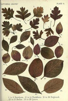 Autumn leaves (1885).