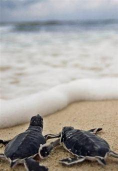 I would love to see baby turtles