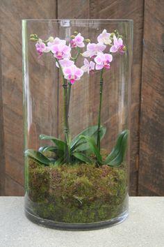 Orchid (Phalaenopsis) – Display Vase