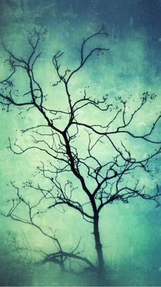 A beautiful bare tree.
