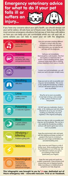 Pet Emergency Infographic: What to do in an emergency #infographic #petsafety