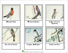 Burgess Bird Book color cards, 9 sets, from That Resource Site