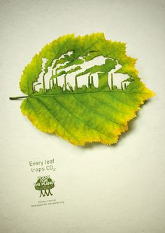 Every leaf traps CO2.  Plant for the planet.