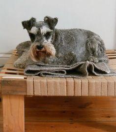 DIY raised dog bed