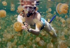 swim with jellyfish in kakaban lake, derawan island, borneo, indonesia