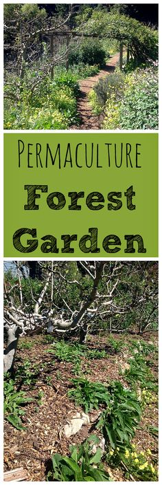 A permaculture fores