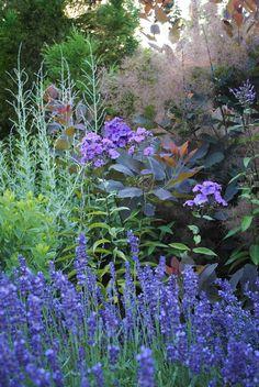 Russian sage, phlox, lavender and smokebush