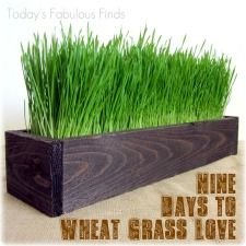 I want to grow some wheatgrass for my cat. Maybe then she'll stop eating my other plants.