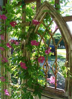 Old Gothic window and climbing flowers