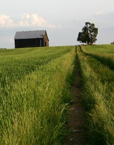 pathway to a simple life