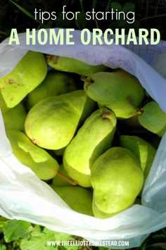 Starting our home orchard - tips on stating and which varieties we chose   The Elliott Homestead