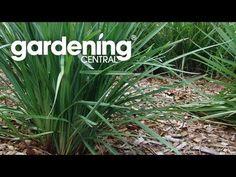 Plants to prevent erosion. - YouTube