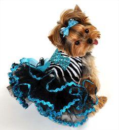 Fancy Dog Clothes | Designer Custom Made Dog Clothing - Tinkerbell's Closet Dog Couture ...