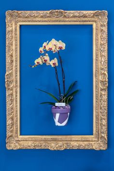 This is not a painting! A REAL phalaenopsis orchid in painted clay pot, secured with a hangapot hanger then framed...Vignette by Reflections Interior Design at the 2014 Orchid Show at the Cleveland Botanical Garden. www.reflectionsid.net clay pots