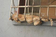 awkward kitty sleeping positions.