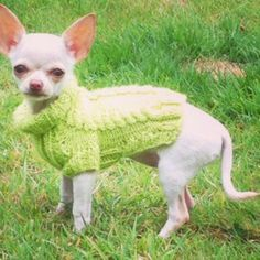 Dog sweater hand knitted in Apple green  small unisex by CUTIEDOG, £10.00