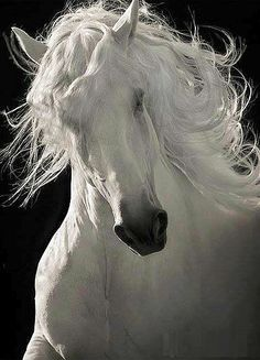 Ghost #Horse