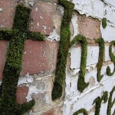 moss paint: take several handfuls of moss, 12oz of buttermilk or a can of beer and a teaspoon of sugar. Mix in a blender until liquid and paint on the wall. Spray daily as it grows.