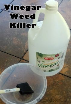 Vinegar weed killer, I use a spray bottle, works great!