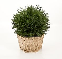 treillag laylagrayc, faux bamboo, bamboo cachepot, tole cachepot