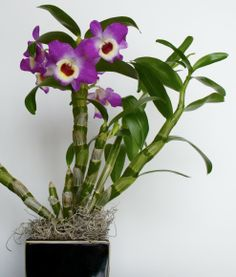 """How To Select A Healthy Orchid"""