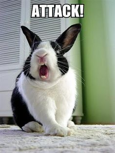 Bunny yawns are hilarious! :)