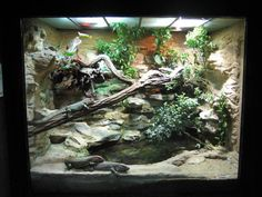 Terrarium for caiman lizards