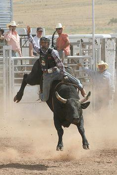 Bull rider at Galisteo Rodeo