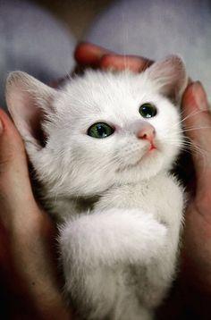 kitty innocence