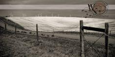 Montana hiline windmill photography by WendySimondsPhotos on Etsy, $25.00