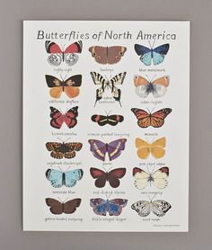 smalladventures butterfly poster: For the little girl's future space?