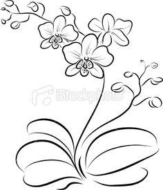 orchid black outline tat orchids pinterest