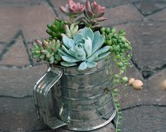 centerpiec, kitchen items, kitchen supplies, watering cans, planter, mini gardens, succulent gardening, flower, container gardening