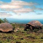Galapagos Islands galapagos islands, bucket lists, galapago island