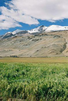 Tso Moriri  Ladakh, Jammu & Kashmir, India