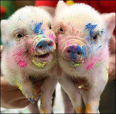 piggys like it colorful