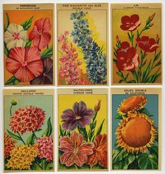 6 Gorgeous Lithograph French Flower Seed Labels #7 from azpaperlady on Ruby Lane