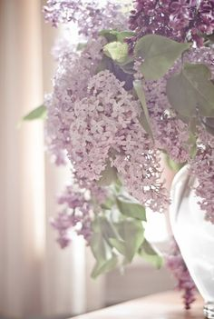 lavender colored lilacs