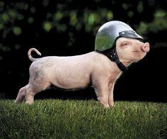 CHiPs Piggy!