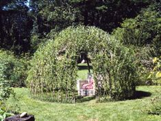 A living willow house!