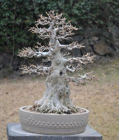 bonsai by stone sculpture, via Flickr