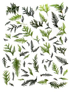 pattern of white cedar (mary jo hoffman)