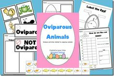 Oviparous Animals Pack-Science and a fun cooking activity!