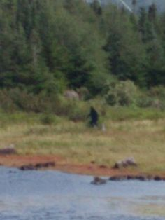 Bigfoot - always blurry!!  :))