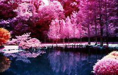 Nature Photography Tumblr