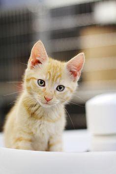 Tiny kitteh