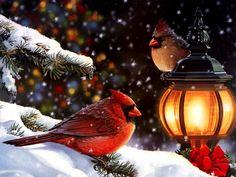 Christmas: Birds
