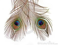 Peacock feathers by Raja Rc, via Dreamstime