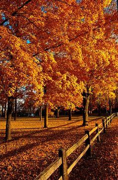 Autumn Fences by Phil Koch