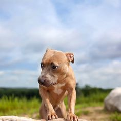 Photographer Helps Dogs in Need From Behind the Camera